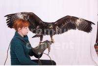 Eagle 0070