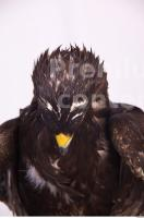 Eagle 0072