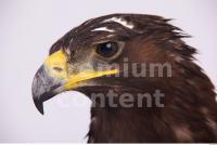Eagle 0076