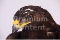 Eagle 0078