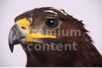 Eagle 0082