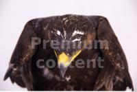 Eagle 0085