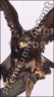 Eagle # 1