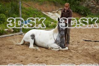 Horse 0002