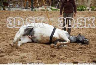 Horse 0005