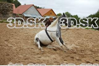 Horse 0006