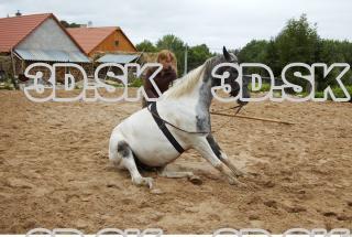Horse 0007