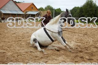 Horse 0008