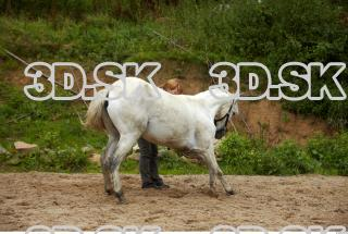 Horse 0013