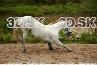 Horse 0019