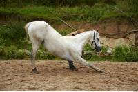 Horse 0020