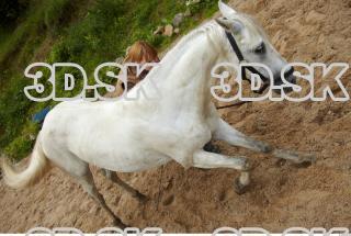Horse 0022