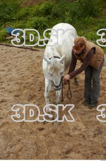Horse 0023