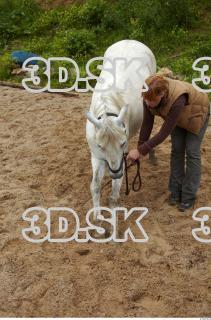 Horse 0024
