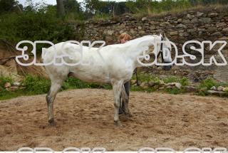 Horse 0026