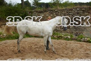 Horse 0027