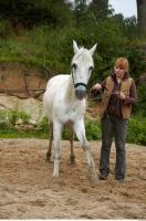 Horse 0031