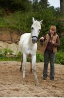Horse 0032