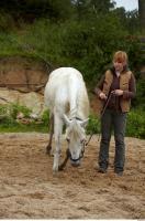 Horse 0034