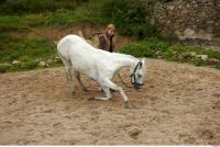 Horse 0036