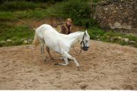 Horse 0037