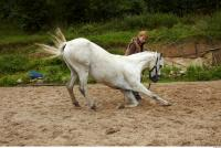 Horse 0038