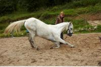 Horse 0039
