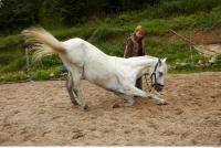 Horse 0040