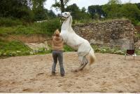 Horse 0042
