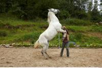 Horse 0043