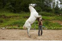 Horse 0044