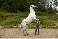 Horse 0045