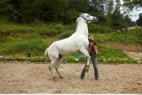 Horse 0046