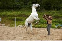 Horse 0047