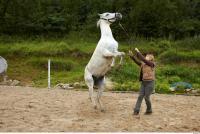 Horse 0048