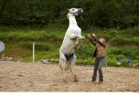 Horse 0049