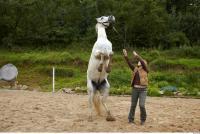 Horse 0050