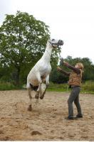 Horse 0051