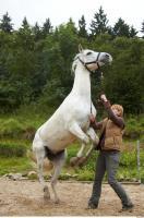 Horse 0052