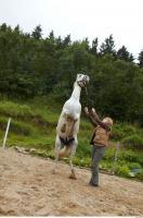 Horse 0054