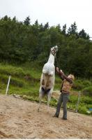 Horse 0055