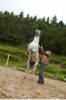 Horse 0057