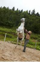 Horse 0058