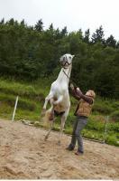 Horse 0059