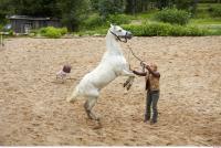 Horse 0060