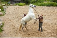 Horse 0061