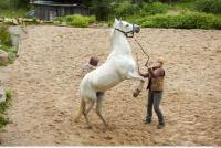 Horse 0062