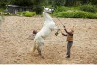 Horse 0063