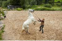 Horse 0064