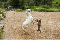 Horse 0065